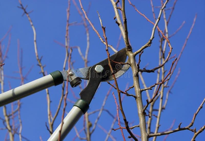 L'albero ha tagliato 14 fotografie stock libere da diritti