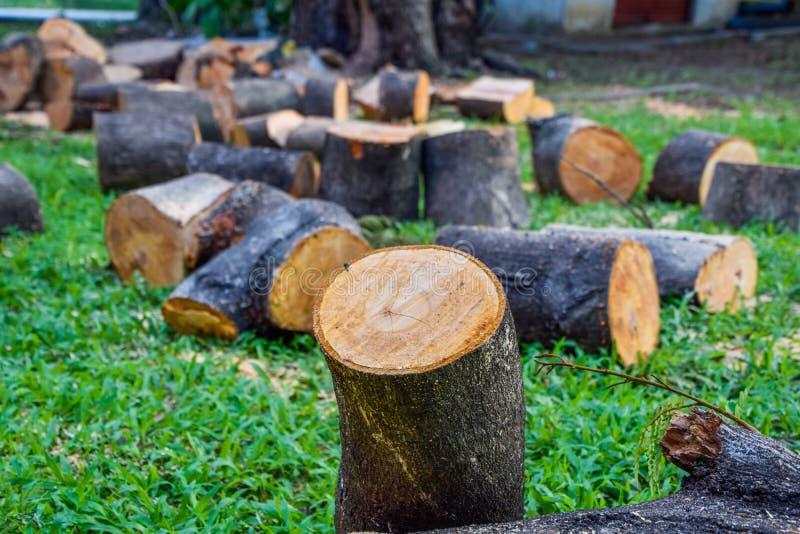 L'albero incide i pezzi, disposti su un prato inglese verde, vicino su dell'albero dei ceppi messo su erba a terra, tagliente gli fotografia stock libera da diritti