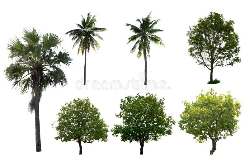 L'albero isolato ha messo un fondo bianco immagini stock libere da diritti