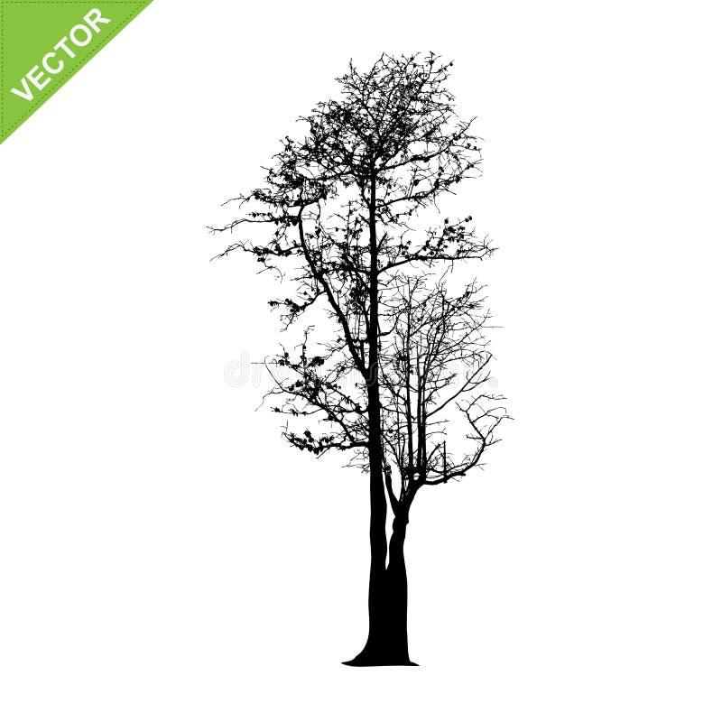 L'albero morto profila il vettore royalty illustrazione gratis