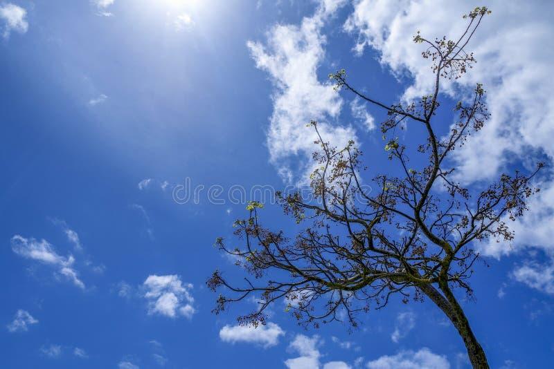 L'albero nel giorno soleggiato con le nuvole fotografie stock
