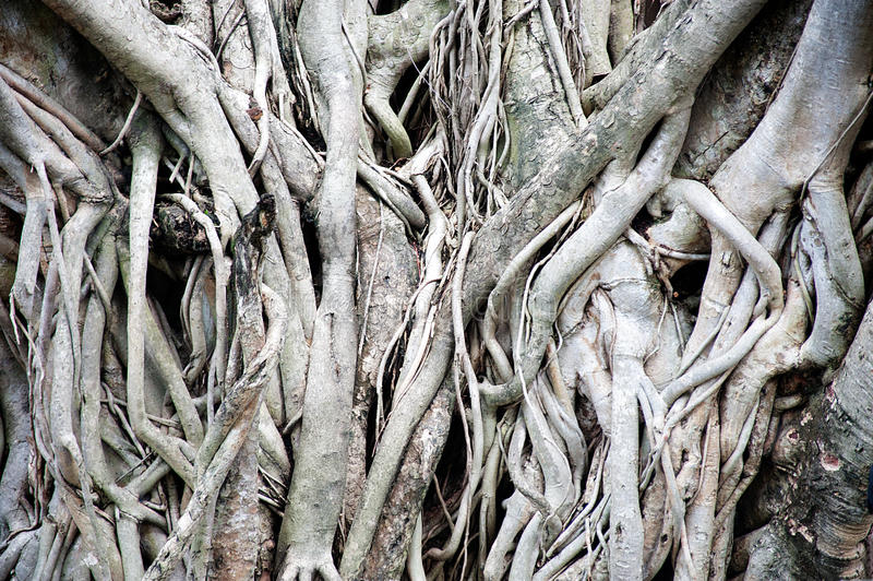 L'albero pianta la struttura ed il fondo fotografie stock