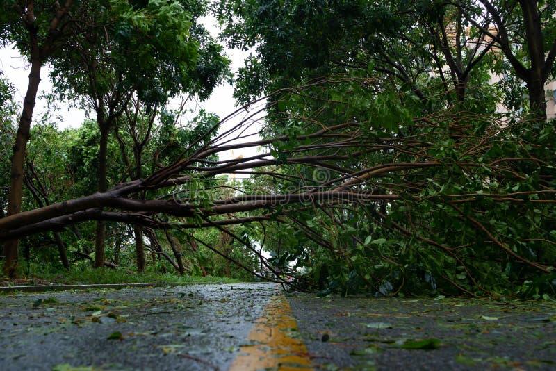 L'albero rotto è caduto giù sulla strada dopo che la forte tempesta è andato da parte a parte fotografia stock