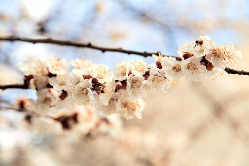 L'albero sboccia germogli fotografia stock libera da diritti