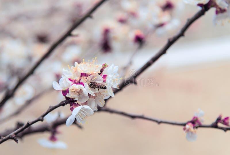 L'albero sboccia germogli fotografia stock