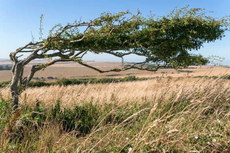 L'albero si è chinato dovuto forza prolungata del vento immagine stock