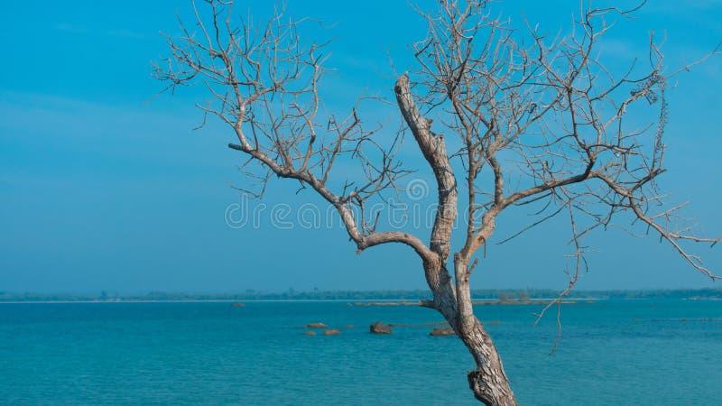 L'albero solo fotografie stock