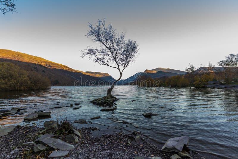 L'albero solo sulla sera, Llanberis, Galles del nord fotografia stock