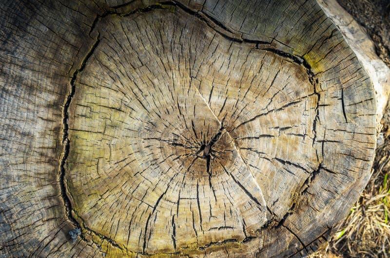 L'albero tagliato rotondo con gli anelli annuali struttura il fondo immagine stock