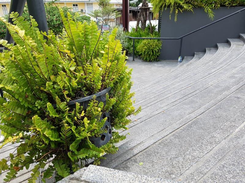 L'albero verde è situato al centro immagini stock