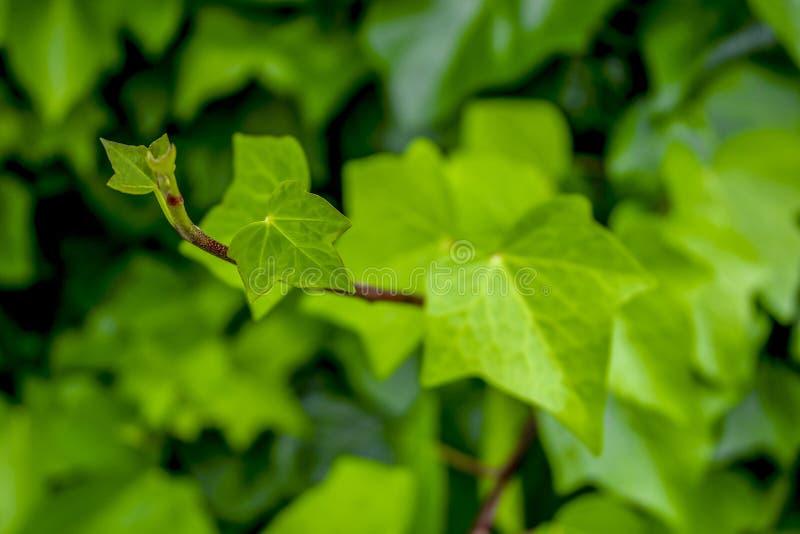L'albero verde lascia in primavera la luce fotografie stock