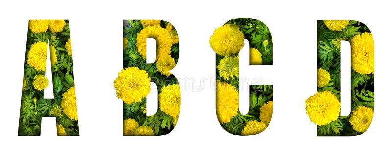 L'alfabeto A, B, C, D ha fatto dalla fonte del fiore del tagete isolata su fondo bianco Bello concetto del carattere immagini stock