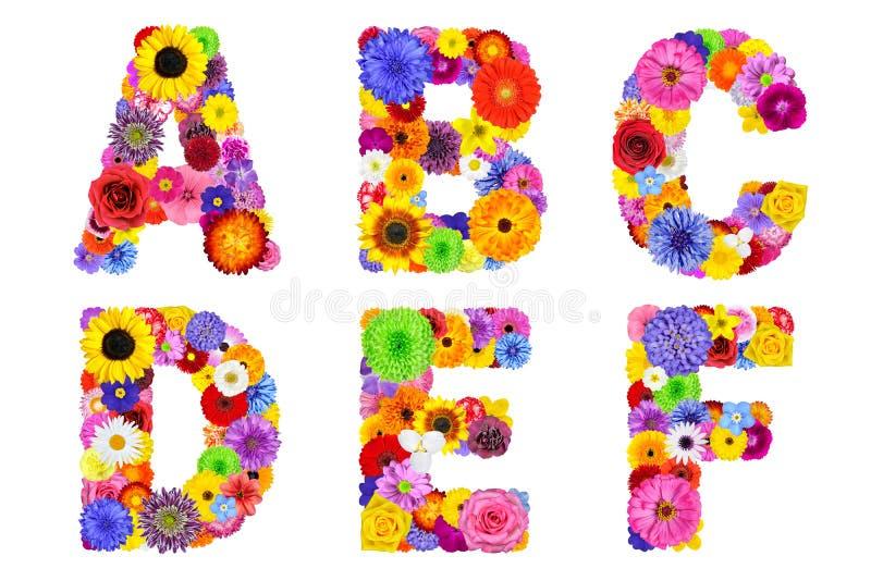 L'alfabeto floreale ha isolato sulle lettere bianco- A, la B, la C, la D, la E, F fotografia stock libera da diritti