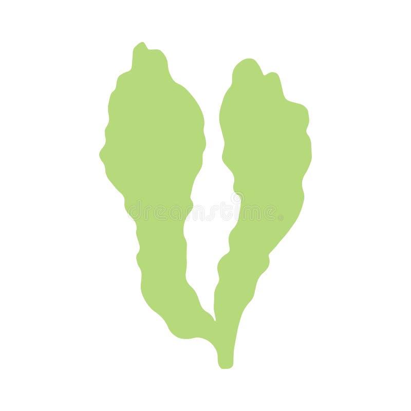 L'alga è immagine fatta a mano isolata sul vecto bianco del fondo illustrazione di stock