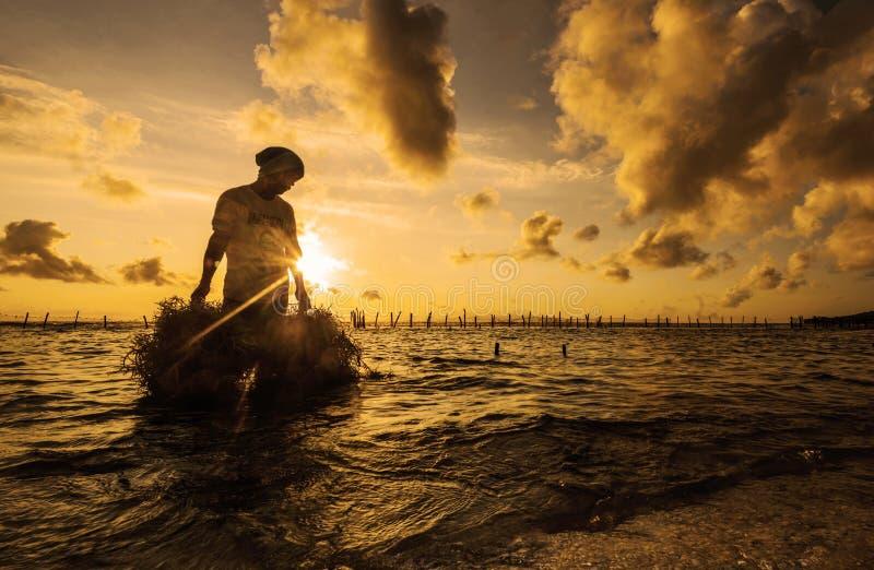 L'alga di trasporto dell'agricoltore indonesiano si è raccolta dalla sua azienda agricola alla casa per l'essiccamento nella matt fotografia stock