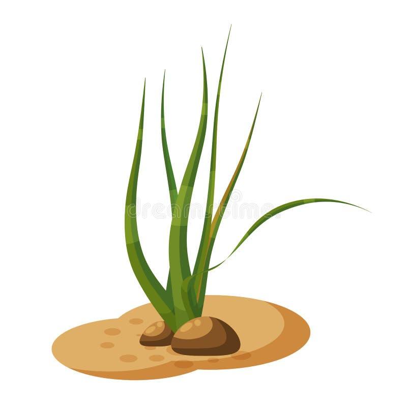 L'alga marina delle alghe verdi, pianta il underwater, isolato su fondo bianco, vettore, stile del fumetto illustrazione di stock