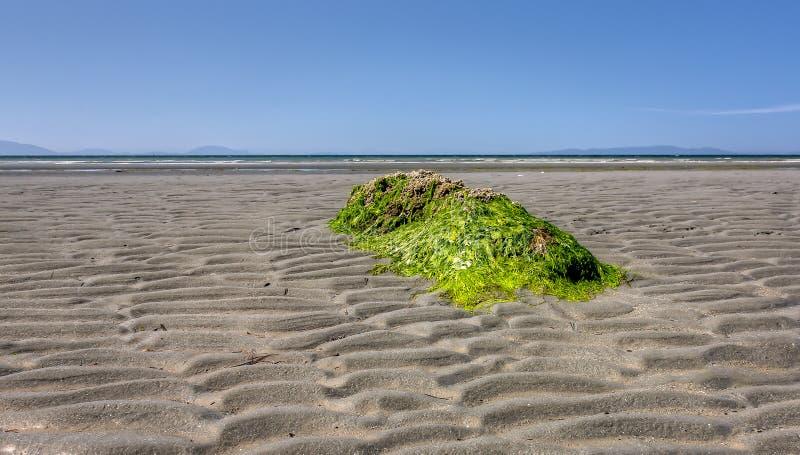 L'algue a couvert la roche image stock