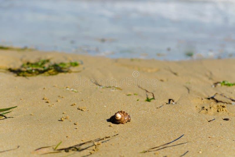 L'algue verte a échoué sur la plage arénacée de ville de la Mer Noire Algues et coquille sur la côte de bord de la mer pendant le photos libres de droits