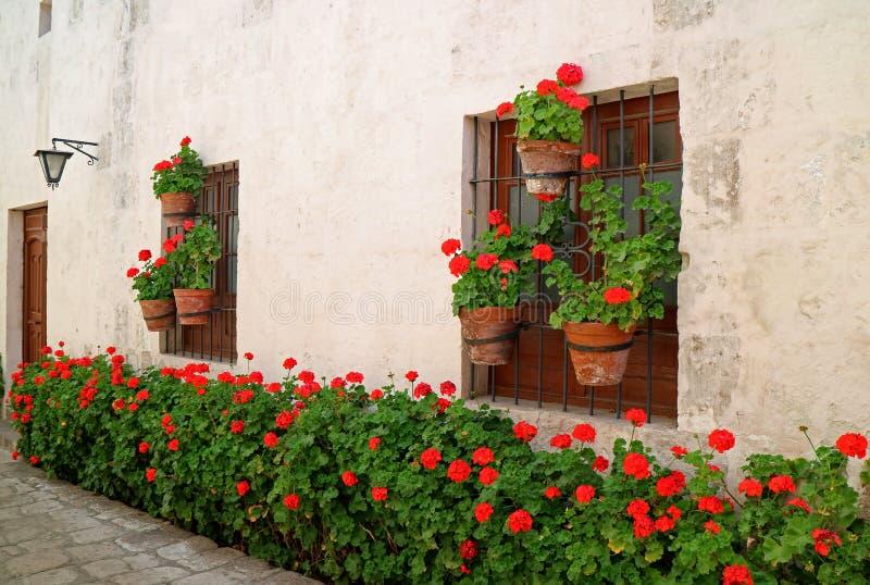 L'allée étroite complètement des arbustes fleurissants rouges et des planteurs accrochant sur la vieille fenêtre du ` s de bâtime image libre de droits