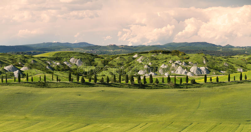 L'allée avec des arbres de cyprès s'approchent de Sienne, Crète Senesi, Toscane, Italie photographie stock