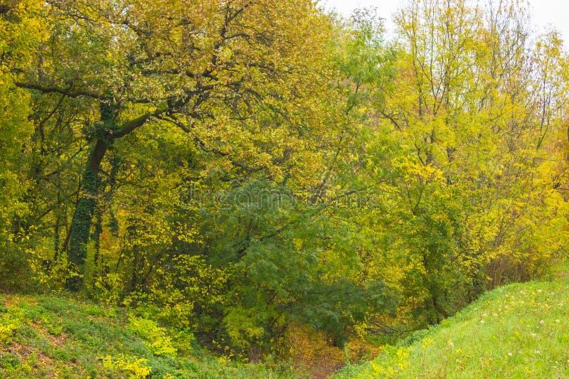 L'allée d'automne des arbres avec le vert et le jaune part dans le parc images stock