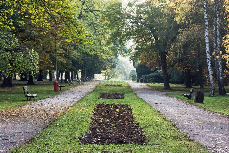 L'allée et le sentier piéton d'arbre avec des bancs pendant l'automne se garent photos libres de droits