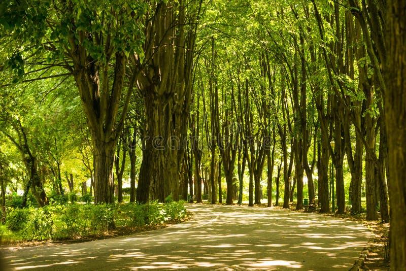 L'allée vide de parc a entouré des limettiers de tilleul au parc d'Olimpia dans Ploiesti, Roumanie image stock
