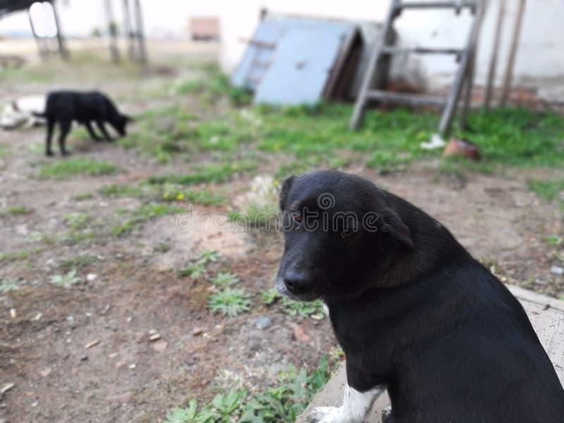 L'amico cane-fedele Che cosa è la forza, il fratello? immagini stock