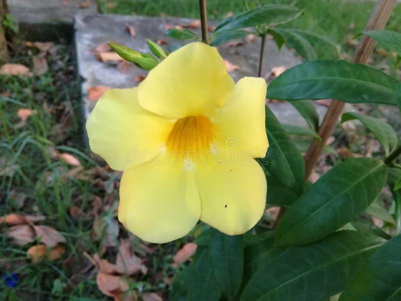 L'AMORE è il fiore Una vita senza sogni è come un giardino senza fiori fotografia stock