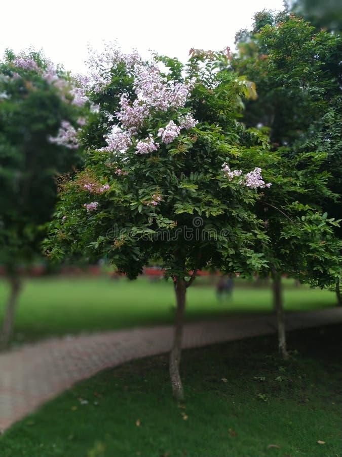L'amore è un albero appena come amicizia immagine stock libera da diritti