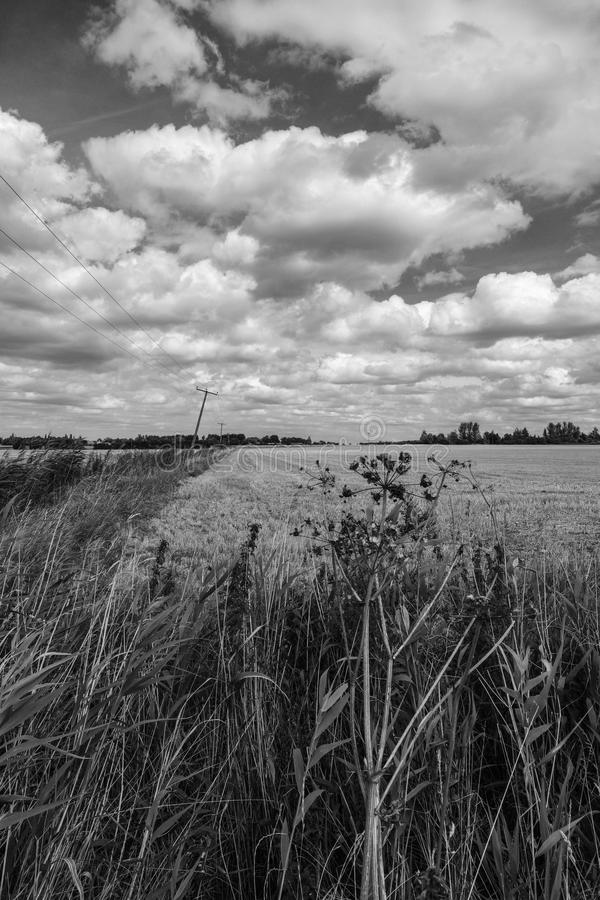 L'ampia estensione di terreno coltivabile raccolto che mostra la riunione della tempesta si appanna fotografia stock
