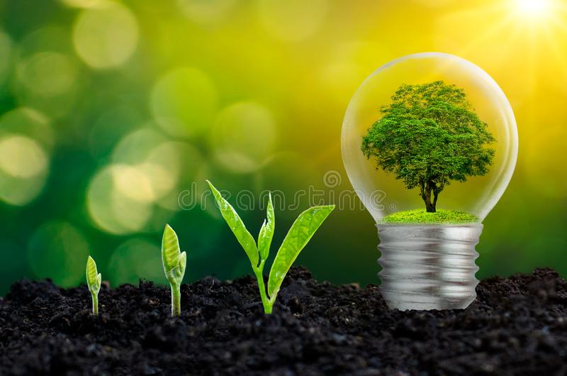 L'ampoule est située sur l'intérieur avec la forêt de feuilles et les arbres sont dans la lumière Concepts de conservation enviro image stock