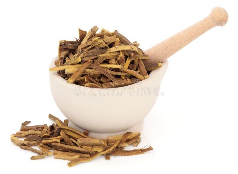 L'Amur Cork Tree Bark Herb immagine stock libera da diritti