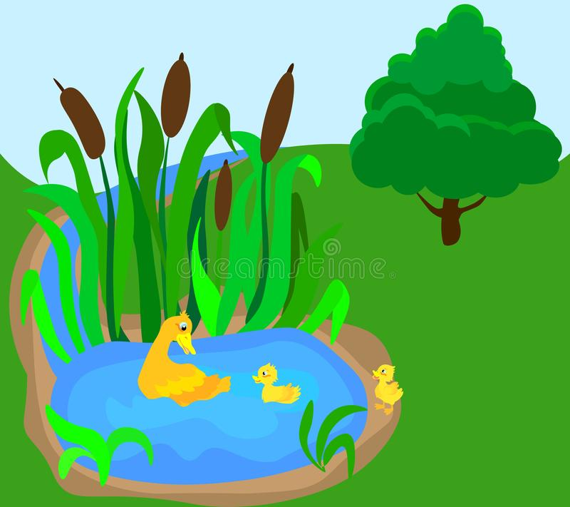 L'anatra della madre sta nuotando con i suoi tre piccoli anatroccoli vicino tramite la corrente della foresta illustrazione vettoriale