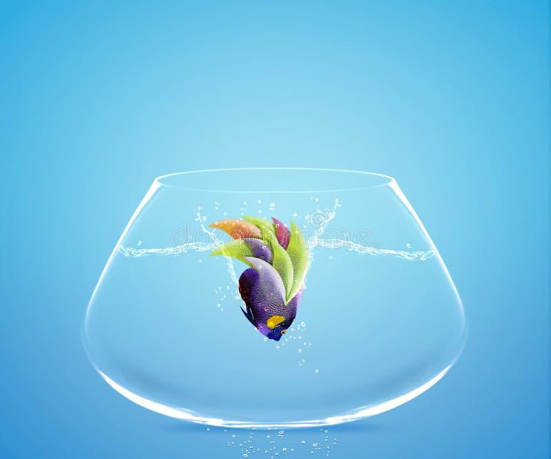 l'Angelfish sautant dans l'autre cuvette illustration de vecteur