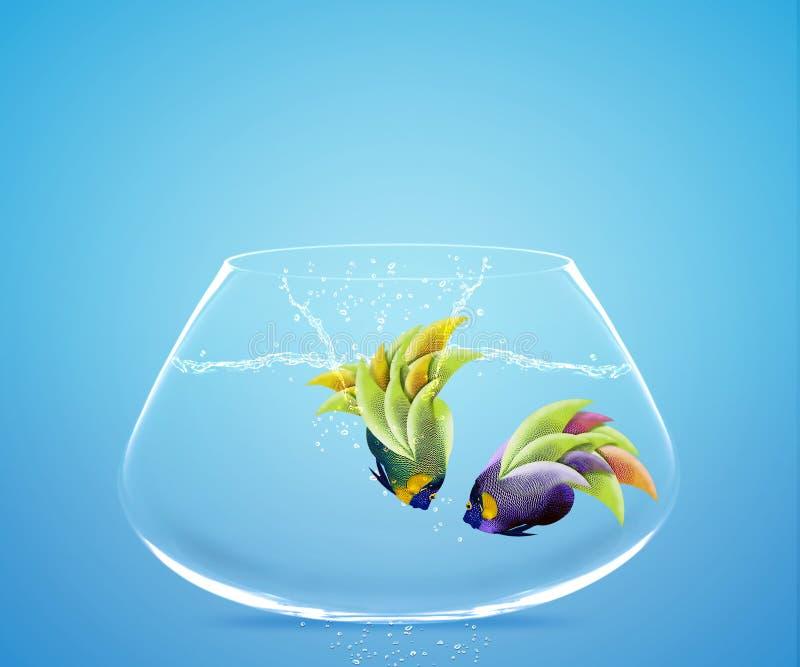 l'Angelfish sautant dans l'autre cuvette illustration stock