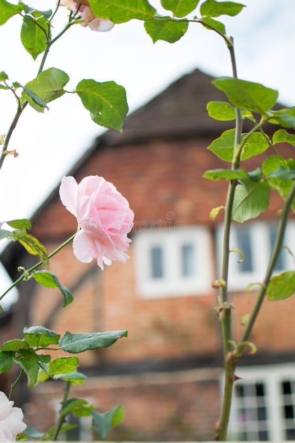 L'anglais assez rose a monté devant le cottage de pays images stock