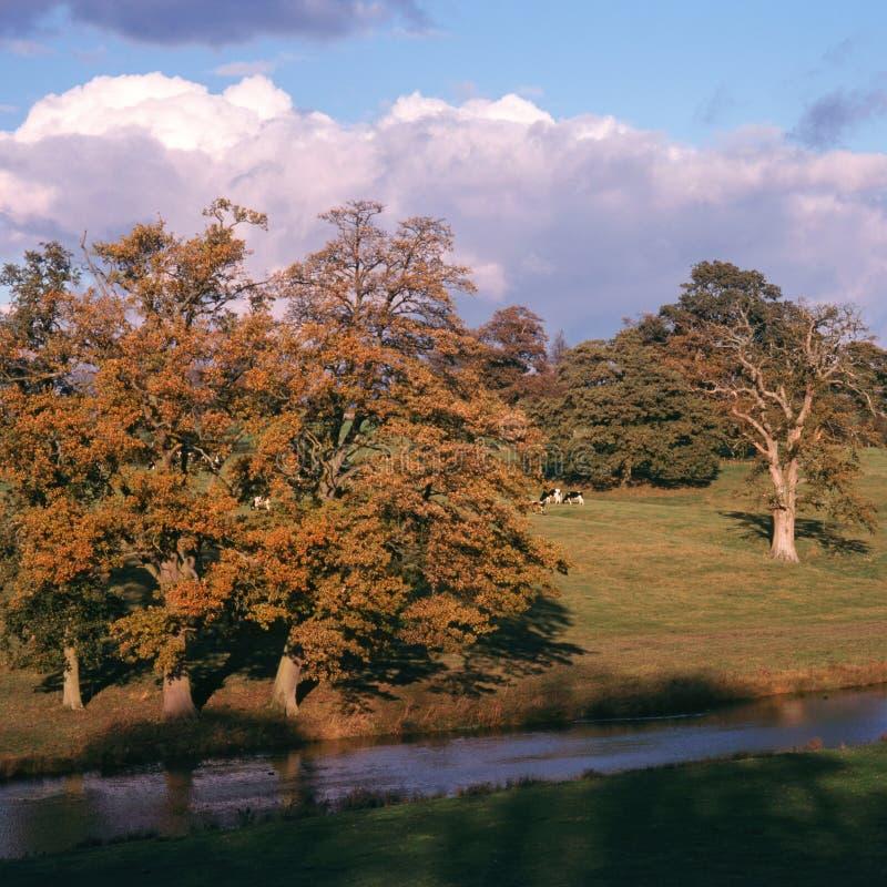 L'Angleterre, Cotswolds, automne de vallée de Sherborne images stock