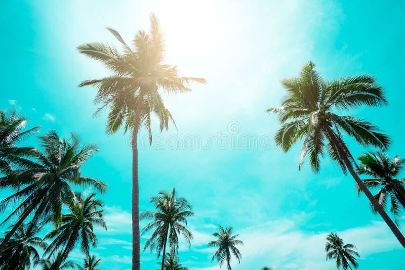 L'annata delle palme ha tonificato, adatta, viaggia, l'estate, vacanza e spiaggia tropicale Creativo fatto delle foglie verdi del immagini stock libere da diritti