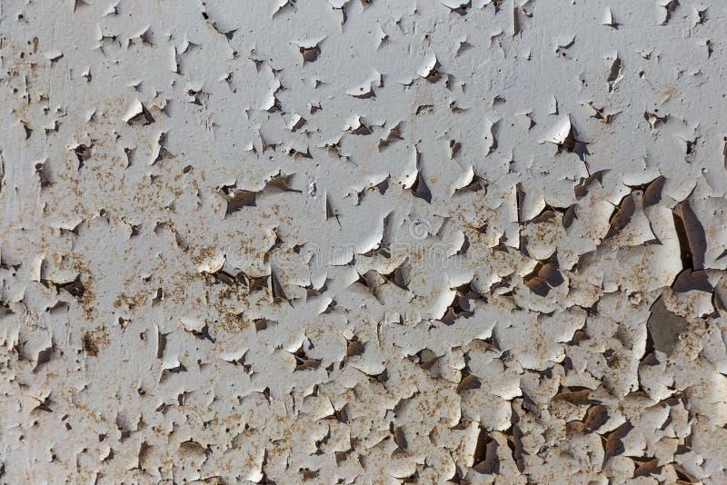 L'annata ha dipinto la struttura di legno del fondo della parete rustica stagionata di legno con la pittura della sbucciatura Spa fotografia stock