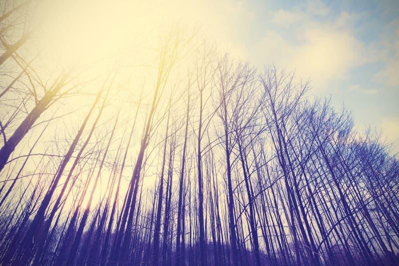 L'annata ha tonificato la foresta pacifica con effetto di scenetta fotografie stock libere da diritti