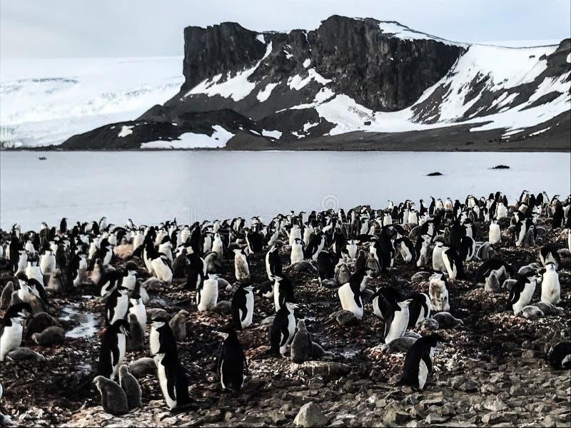 L'Antarctique en hiver images libres de droits