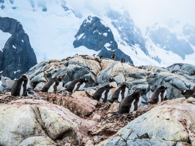 L'Antarctique en hiver photos libres de droits