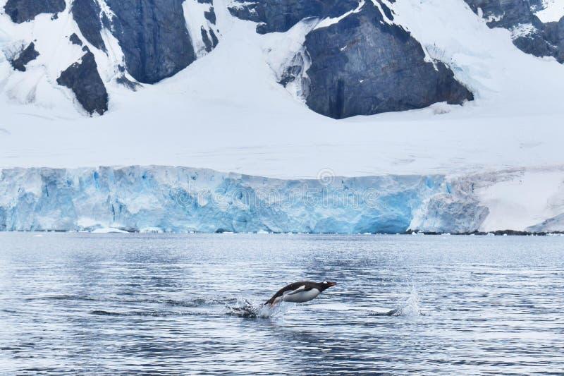 L'Antarctique, paysage, avec un pingouin de natation de gentu photographie stock libre de droits