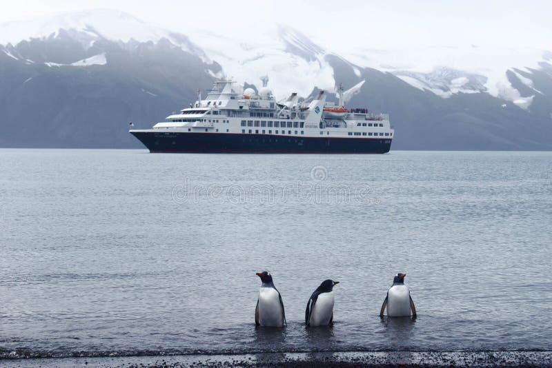 L'Antarctique, pingouins de gentu sur le rivage image stock