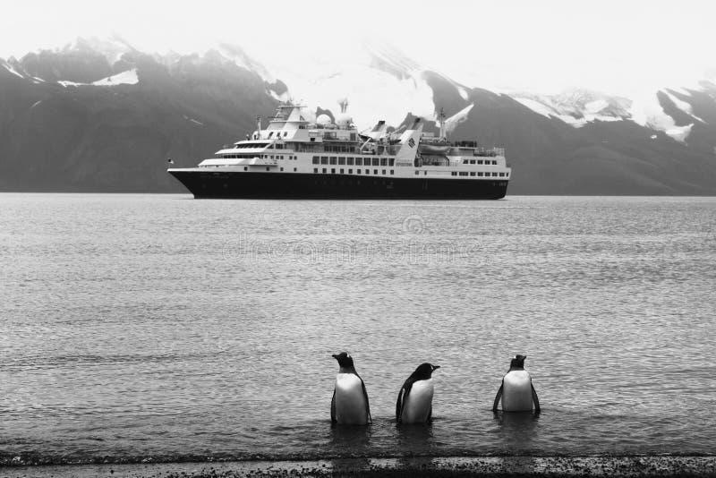 L'Antarctique, pingouins de gentu sur le rivage photo stock