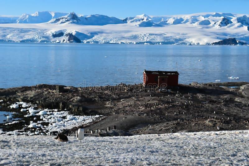 L'Antarctique un paysage étonnant avec un abri en bois pour l'explorateur et quelques pingouins de gentu images libres de droits