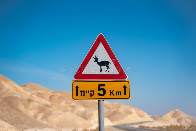 L'antilope firma dentro il deserto dell'Israele Strada vuota fotografia stock libera da diritti