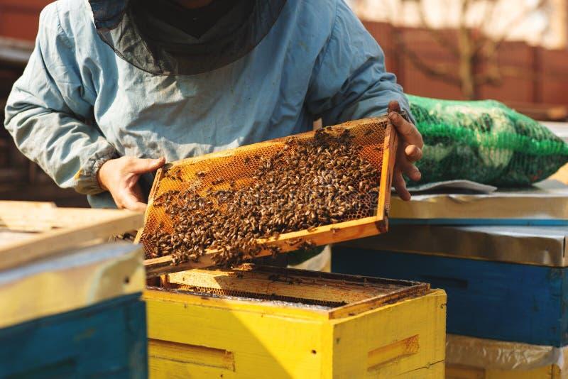 L'apicoltore sta lavorando con le api e sta ispezionando l'alveare dopo l'inverno fotografie stock libere da diritti