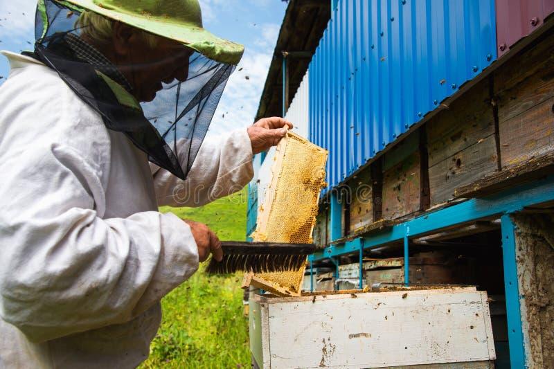 L'apicoltore tiene una struttura con miele sigillato con la cera fotografie stock libere da diritti
